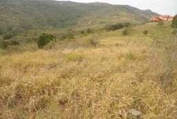 Terreno à venda  em Jarinú/SP - Campos dos Aleixos REF:4712